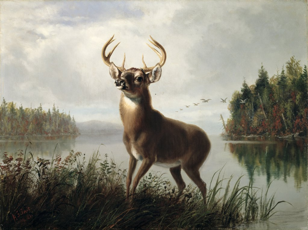 Stock Photo: 900-141126 Eight Point Stag