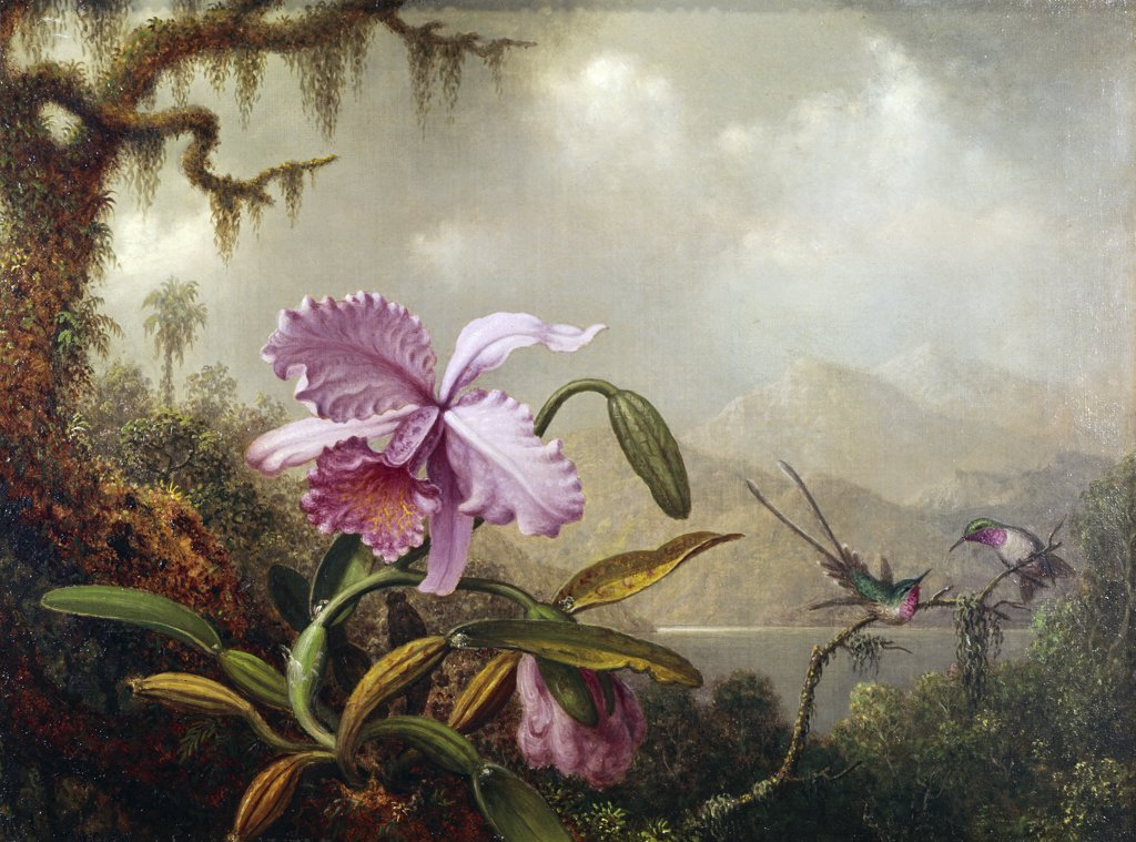 Stock Photo: 900-2251 Hummingbirds and Orchids