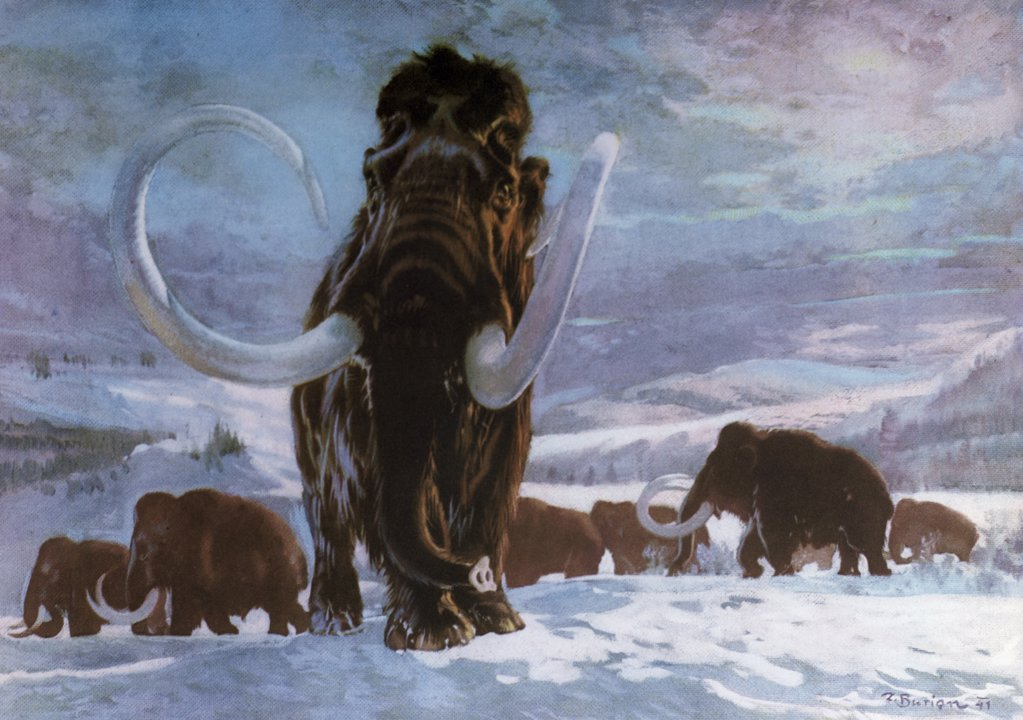 Stock Photo: 900-7527 Mammoth by Zdenek Burian, 1941, 1905-1981