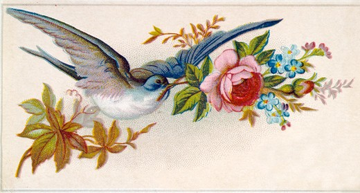 Blue Bird with Rose, Nostalgia Cards : Stock Photo