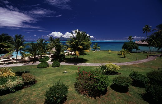 Trees in a formal garden of a hotel, Tahiti Beachcomber Hotel, Tahiti, French Polynesia : Stock Photo