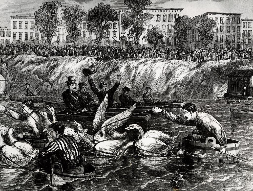 Goose Race, September 23, 1869 : Stock Photo