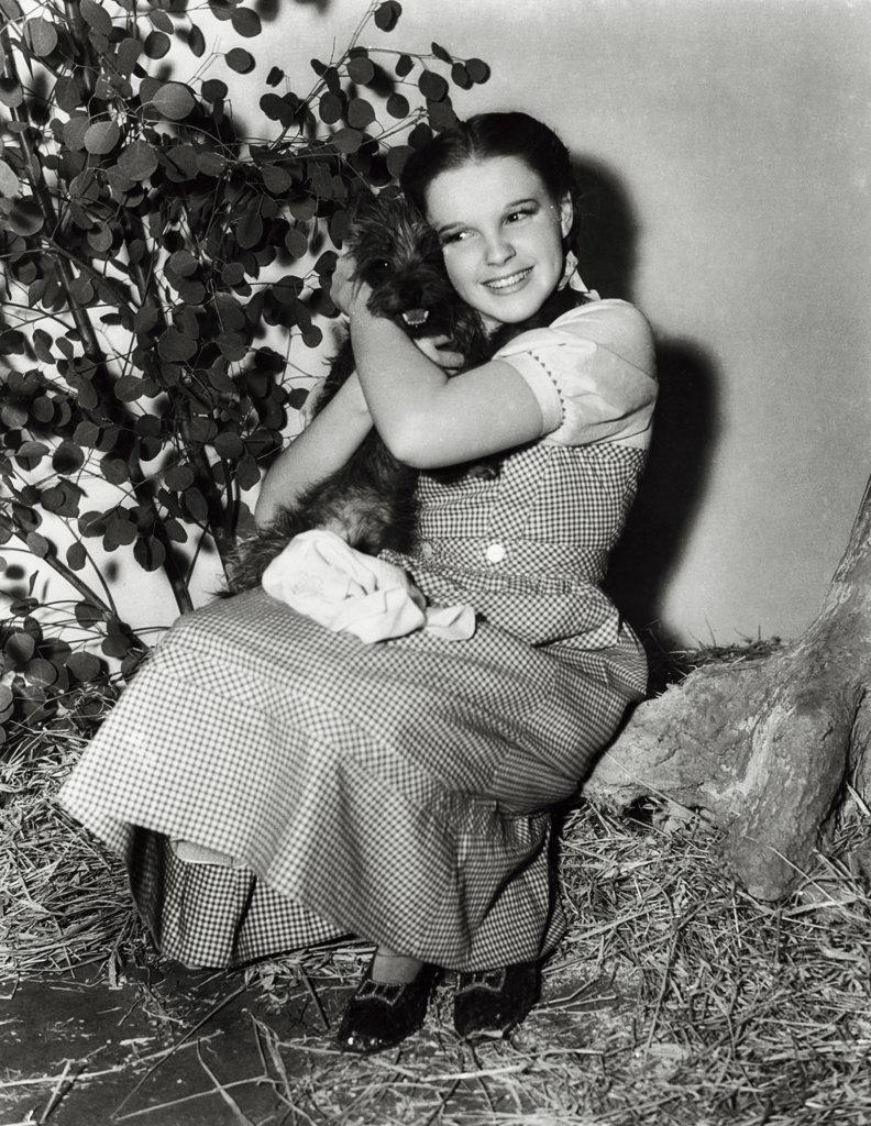 Stock Photo: 990-303 Judy Garland with Toto, The Wizard of Oz, 1939