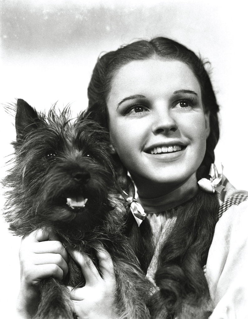 Stock Photo: 990-306 Judy Garland with Toto, The Wizard of Oz, 1939