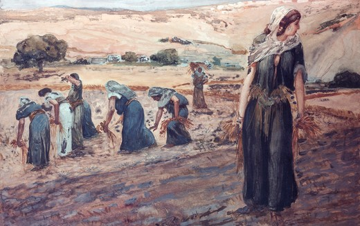 Stock Photo: 999-206 Ruth Gleaning