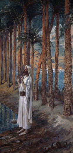 Stock Photo: 999-349 The Palm Tree